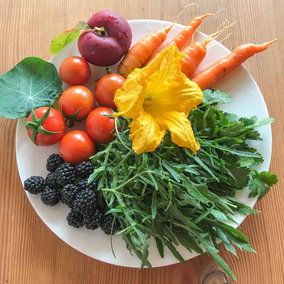 """Die Ernährung ist der """"Motor"""" unseres Lebens, das heißt des Körpers und des Geistes."""